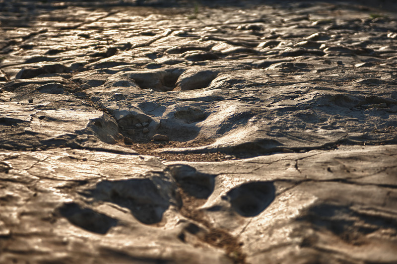Morrison Formation dinosaur trackway site. Allosaurus sp.