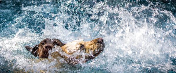 Dogs Splashing