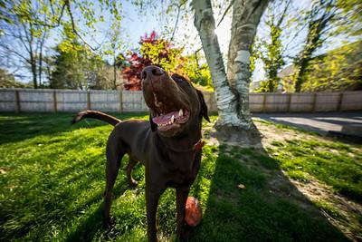 Dino Enjoying the Backyard