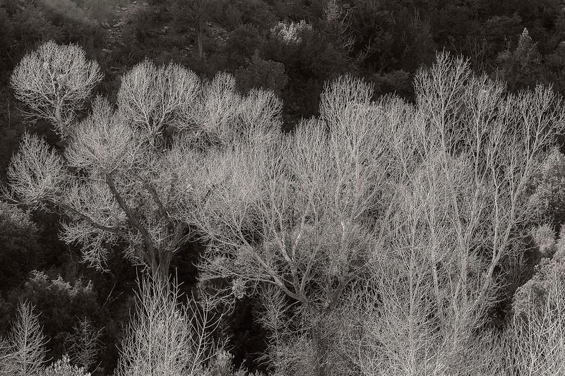 Creek bottom, near the Salt River Canyon, Arizona