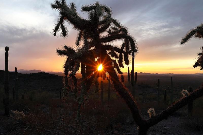 2 - Sunset through Cholla Cactus, Picacho Peak State Park, Arizona