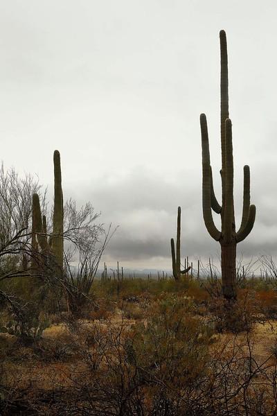 2 - Saguaro National Park, Arizona