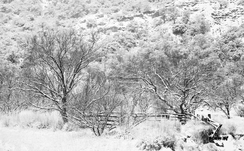 """""""Fence and Trees in Snow""""<br /> <br /> A snowstorm coats the trees and a fence along the boundary of the Coronado National Forest near Patagonia, Arizona, USA."""
