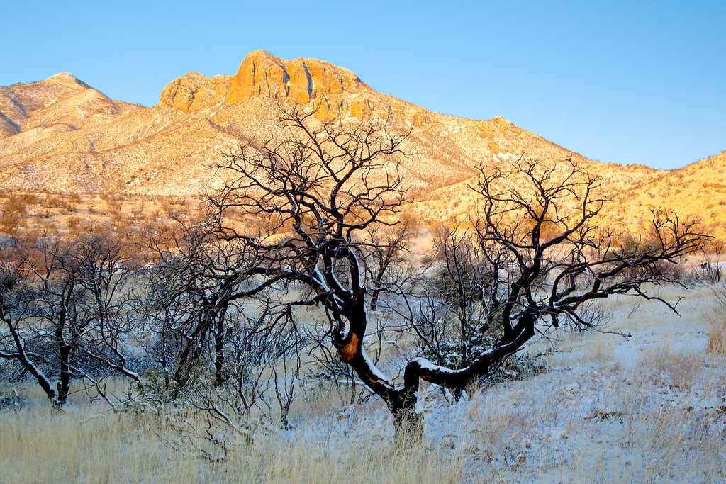 A snowfall and sunrise light highlight the Huachuca Mountains in the background, with the contrast of burned trees in the foreground.. Taken in the Coronado National Forest, Arizona, USA.