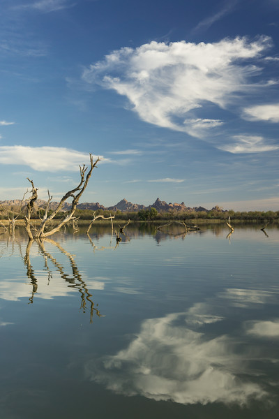 Surreal clouds reflect in the backwaters of the Colorado River. Taken at Havasu National Wildlife Refuge, Arizona, USA.
