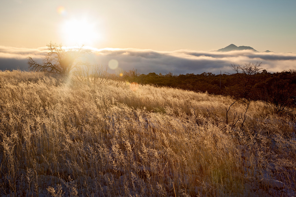 The sun rises above the clouds and the sky islands, backlighting the grasses. Taken in the Coronado National Forest, Arizona, USA.