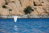 A great egret (Ardea alba) flies over Watson Lake, with the Granite Dells in the background. Taken from the kayak at Watson Lake, Prescott, Arizona, USA.
