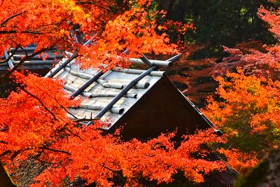 紅葉の印象