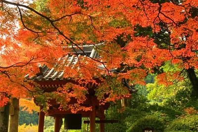 吊金堂の紅葉