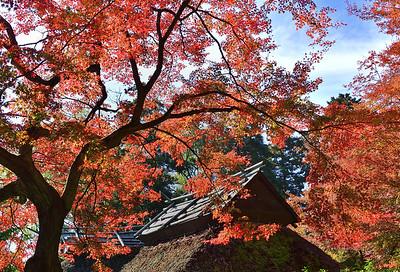 秋色の訪れ