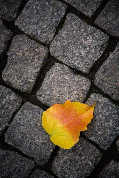 Leaf on cobblestones
