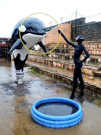 Orca display by Banksy