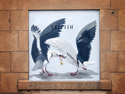 Selfish seagulls
