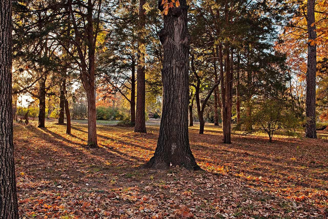 Autumn Evening Shadows