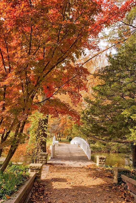 Footbridge in Autumn