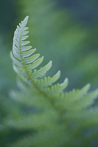 """Yellowstone Fern""   Taken  when we had a slightly cloudy, yet still, day. It's time to photograph wildflowers and plants when you get conditions like that. This is a fern (species unknown) taken in Yellowstone National Park, Wyoming, USA."