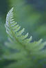"""Yellowstone Fern""<br /> <br /> <br /> Taken  when we had a slightly cloudy, yet still, day. It's time to photograph wildflowers and plants when you get conditions like that. This is a fern (species unknown) taken in Yellowstone National Park, Wyoming, USA."