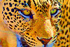 """Leopard Serigraph""<br /> <br /> A leopard becomes digital art through the magic of the Topaz Simplify filter for Photoshop. The original photo of the leopard was taken in the Samburu National Reserve, Kenya, Africa."