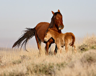 """On The Windy Range""   A wild horse mare with her newborn foal. Taken in Southwest Wyoming."