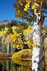 """""""Dancing Aspen""""<br /> <br /> I used a free plug-in that was called Pixel Bender. Now Adobe has renamed it Oil Paint and has rolled it into Photoshop as a filter. It has a customizable interface to do oil paintings and other special effects. I like the smoothing and curls that it adds to foliage. The original photo of the fall foliage was taken in the Fishlake National Forest, Utah, USA."""