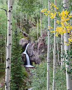 """Beginning to Turn""  The aspen (Populus tremuloides) begin to turn at Nellie Creek Falls. Taken in the Uncompahgre National Forest, Colorado, USA."
