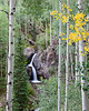 """""""Beginning to Turn""""<br /> <br /> The aspen (Populus tremuloides) begin to turn at Nellie Creek Falls. Taken in the Uncompahgre National Forest, Colorado, USA."""