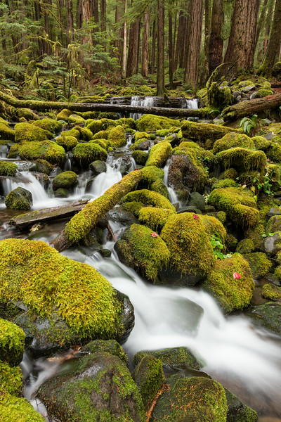 """The Green Scene""<br /> <br /> Cascades along the trail to Sol Duc Falls. Taken in Olympic National Park, Washington, USA."