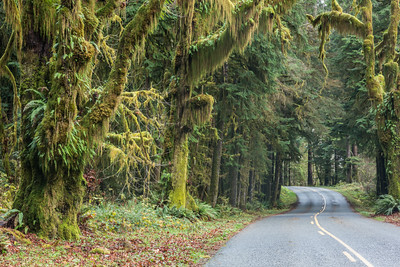 """Rainforest Road""  The road leading through the Hoh Rain Forest. Taken in the Hoh Rain Forest, Olympic National Park, Washington, USA."