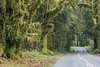 """""""Rainforest Road""""<br /> <br /> The road leading through the Hoh Rain Forest. Taken in the Hoh Rain Forest, Olympic National Park, Washington, USA."""