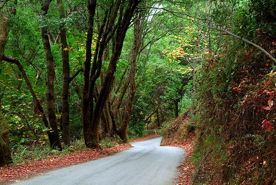 Sycamore Canyon Road in Autumn