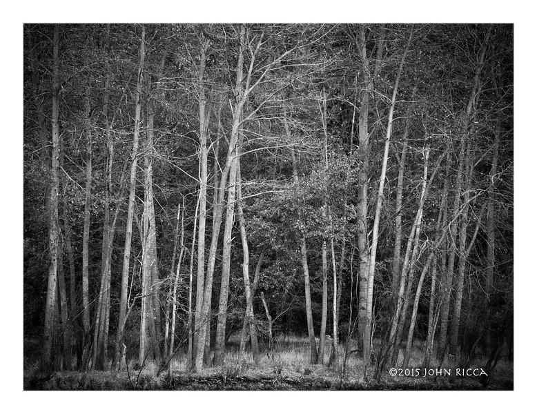 Merced River Woods