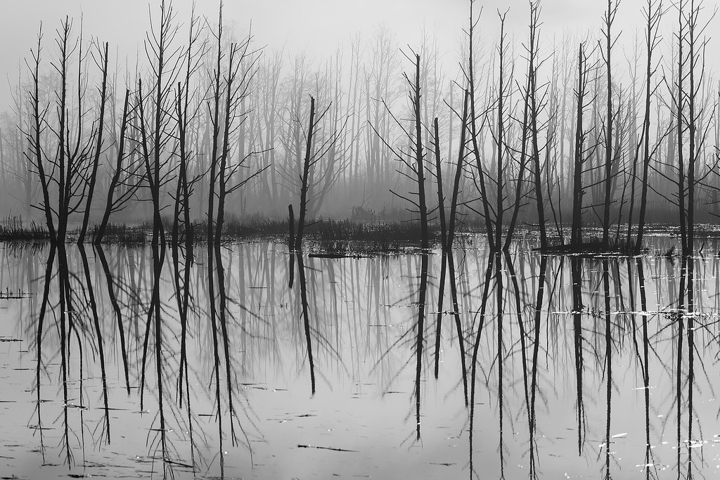 Winter trees, Skagit River Delta, Mt Vernon, Washington