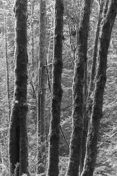 Forest Detail #1, E Sooke Park, Vancouver Island, BC