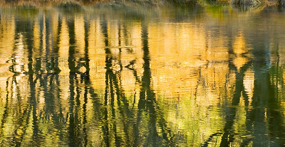 Merced River Tree Reflections