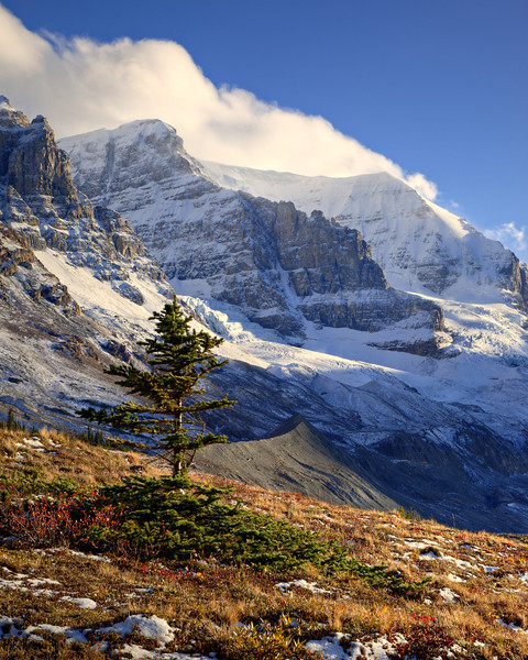 """Jasper Scene""<br /> <br /> Fall color and snow along the Icefields Parkway. Taken in Jasper National Park, Alberta, Canada."