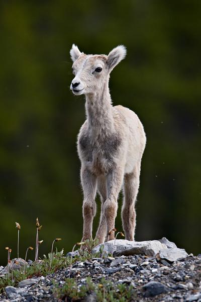 Taken in Muncho Lake Provincial Park, British Columbia, Canada.