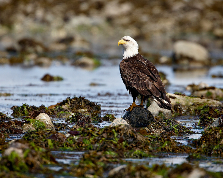 Taken in Parksville on Vancouver Island, British Columbia, Canada.
