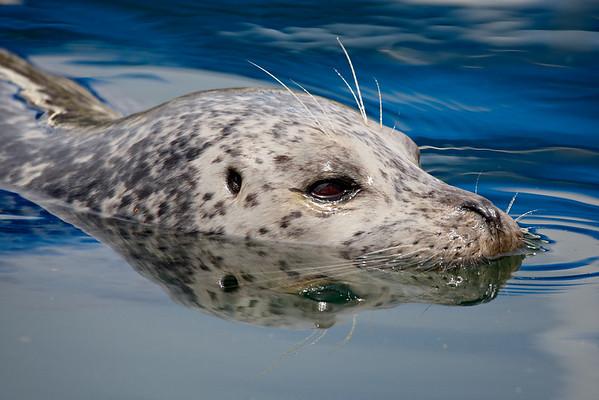 Taken at the Oak Bay Marina in Victoria, Vancouver Island, Canada.