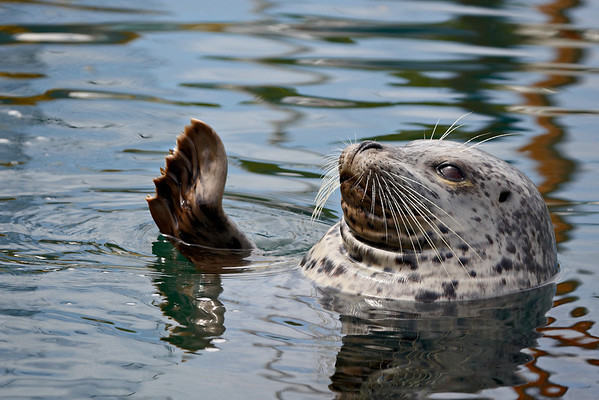 Taken at the Oak Bay Marina in Victoria, Vancouver Island,