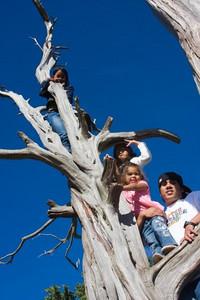 Family Tree 2008