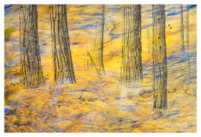 Yosemite Collage 2
