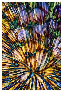 Ruth Bancroft Garden Collage 1