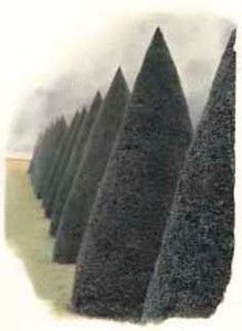Topiary Versailles, France.