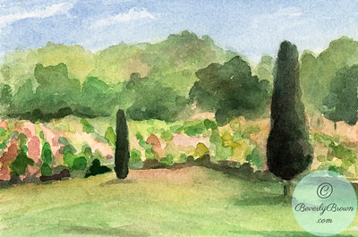 Vineyard  Provence  - Beverly Brown Artist