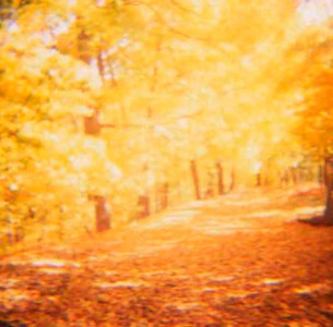 Path with yellow leaves.