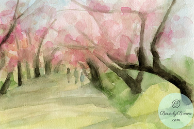 Cherry Blossoms Central Park  - Beverly Brown Artist
