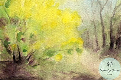 Forsythia in Central Park - Watercolor Illustration  - Beverly Brown Artist