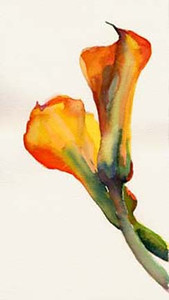 Orange calla lilies  - Beverly Brown Artist