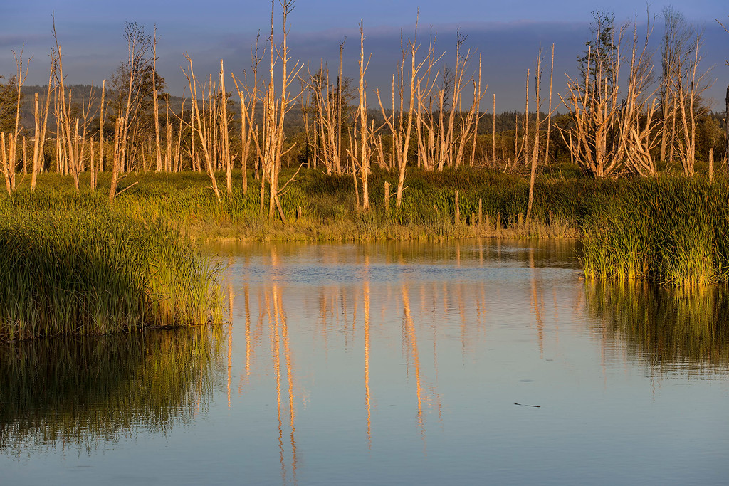 Evening Light, trees and pond, Skagit Wildlife Preserve, Mt Vernon, WA