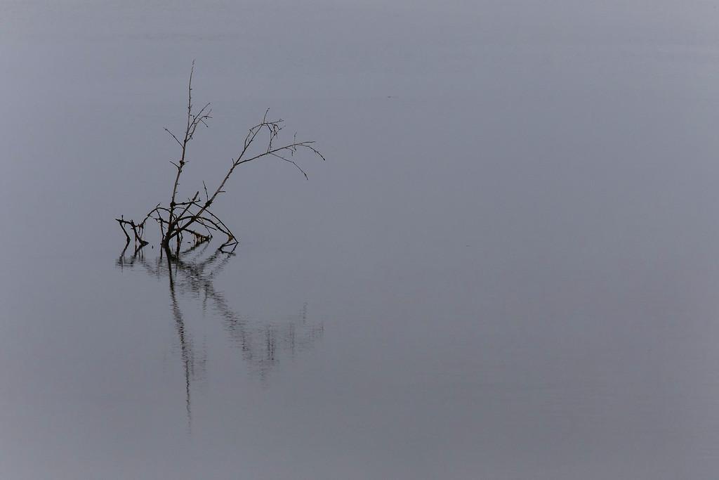 A bit of calm, Nisqually Delta, near Olympia, WA